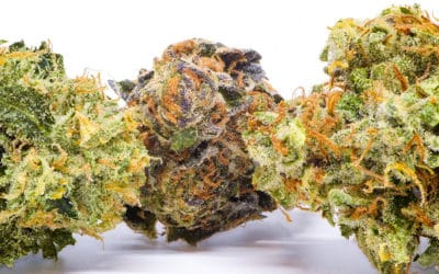 Cannabis 101 Dispensary Info For Beginners